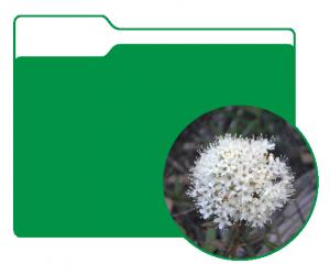 Plant 2 folder image
