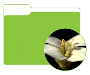 A folder with a thumbnail image of Plant 1