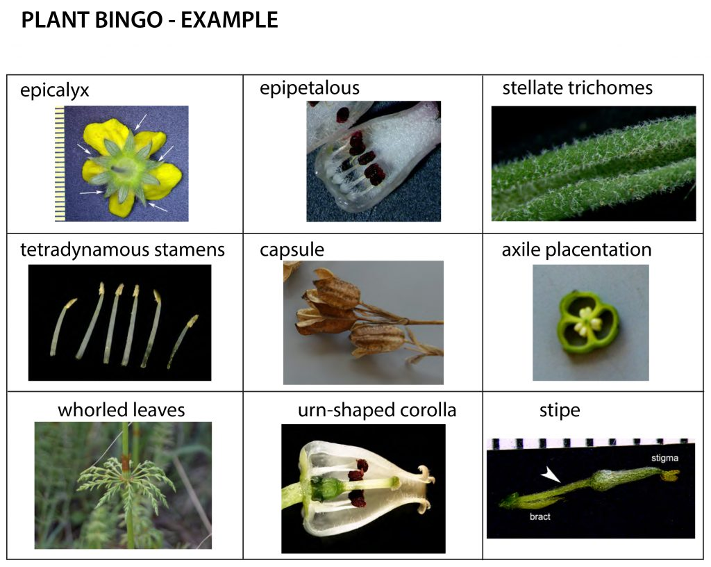 An example plant BINGO card completed