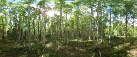 Virtual Biome: Interior Forest
