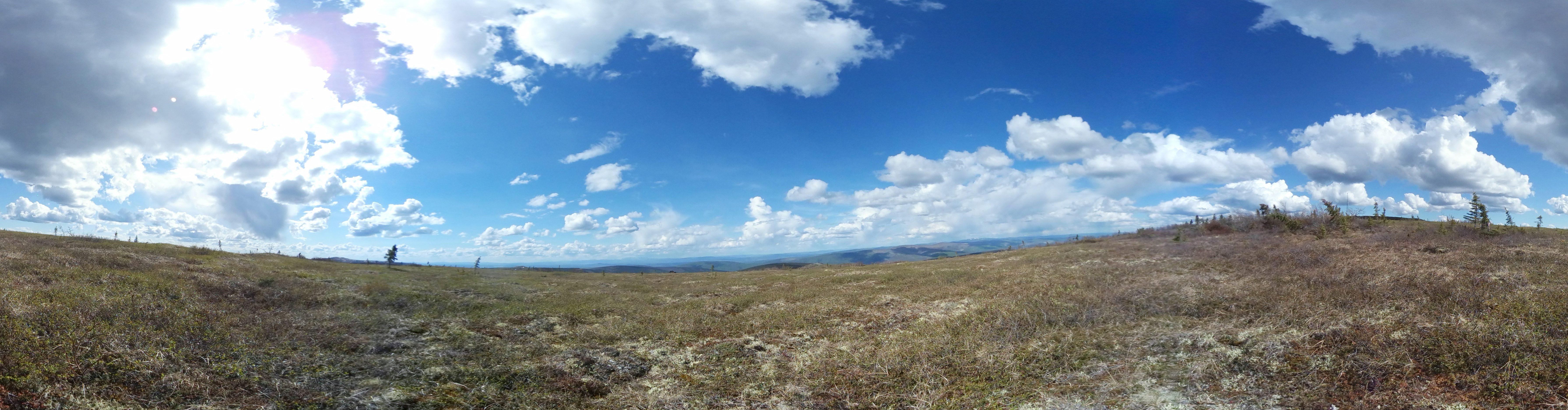 BIOL F195: Intro to Alaska Flora