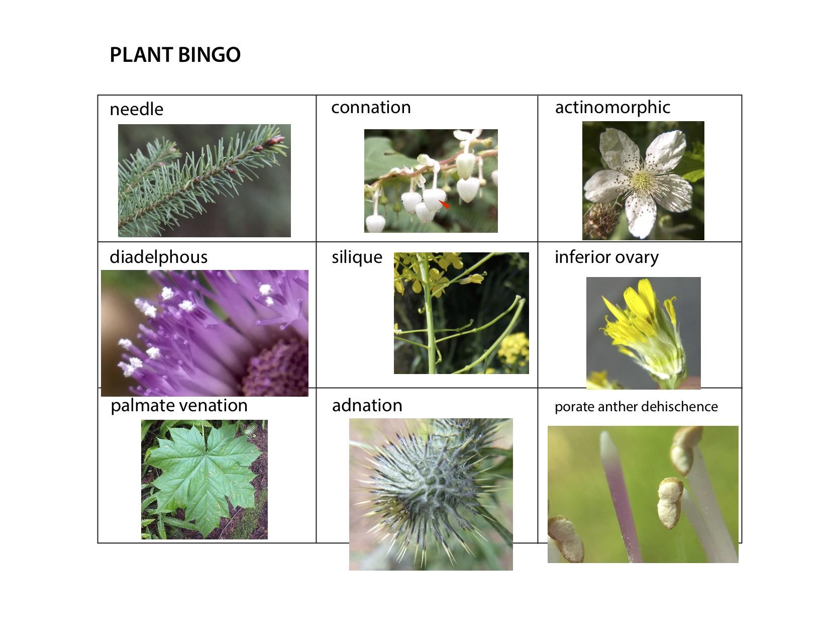 Plant_Bingo_1