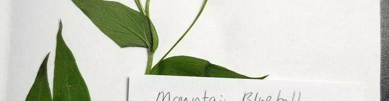 Plant Specimen Vouchers with Plant Press – SLC