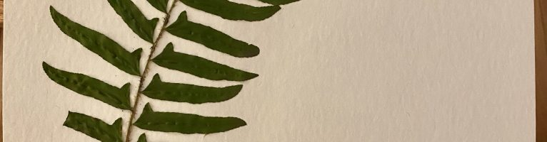 Pressed Plants